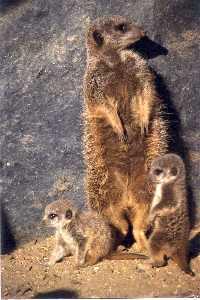 Осиновителите на животни в софийската зоологическа градина вече са 48