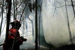 Пожарите в Португалия са потушени
