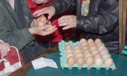 Проверяват птицевъдни обекти и пазари за птици в цялата страна