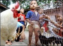 Още една жертва на птичия грип в Индонезия