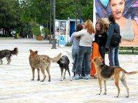 Бездомните кучета в София били точно 16 200