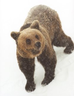 Български мечки станали музи на немска писателка