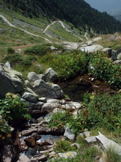 Швейцарци: Корупция унищожава българската природа