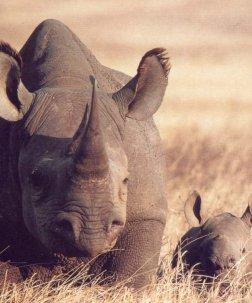 Кръстиха новороден носорог Кофи Анан