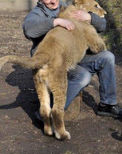 Румънец отглежда лъв в двора си