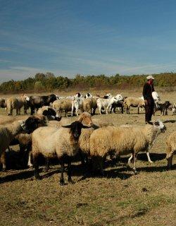 Овчари сме, не сме овце!