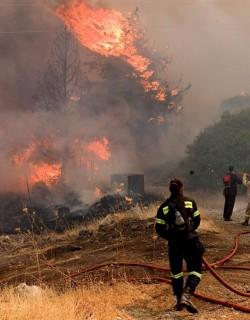 240 декара гора изгоря в Родопите