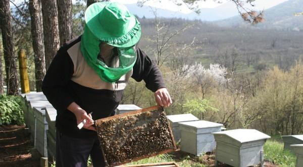Тревога! Пчелите ни намаляват опасно