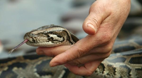 Змия с непорочно зачатие