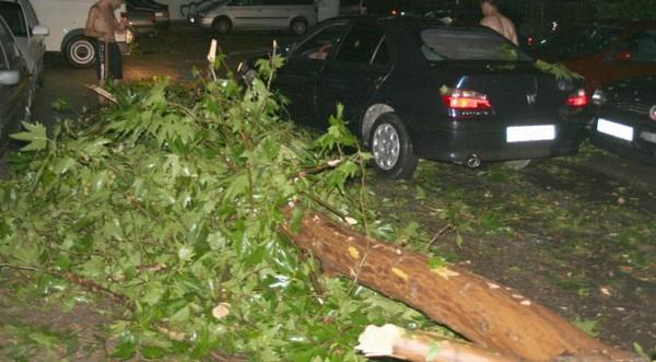 Бурният вятър изкорени дървета и билбордове в страната