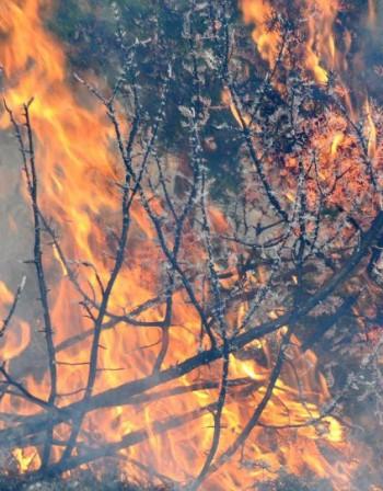 "Пожар избухна в парк ""Централен Балкан"""