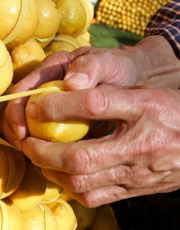Проблеми с храносмилането? Лимоните помагат!