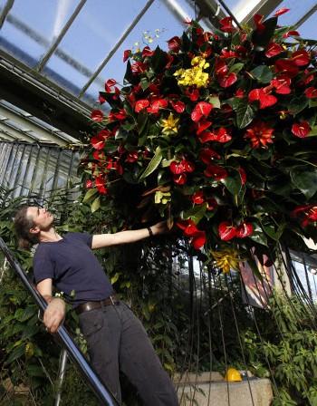 Градинарство и готвене предпазват от деменция