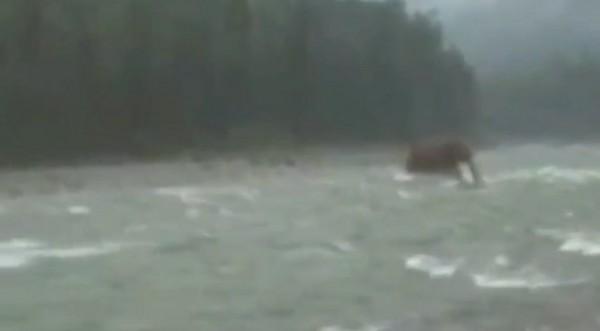 Ако щете – вярвайте. Мамут пресича река в Сибир