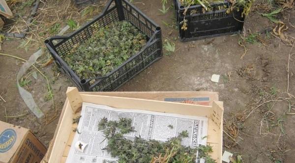 Иззеха наркотици при акция в Бургас