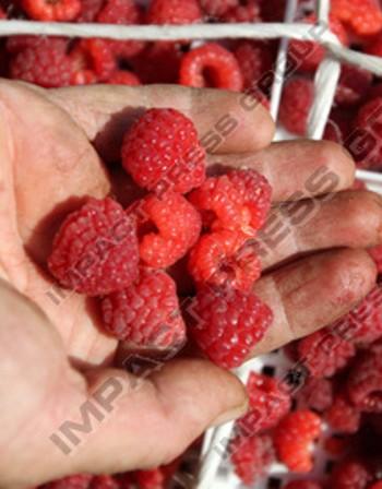 Плодове и зеленчуци за златист блясък на кожата