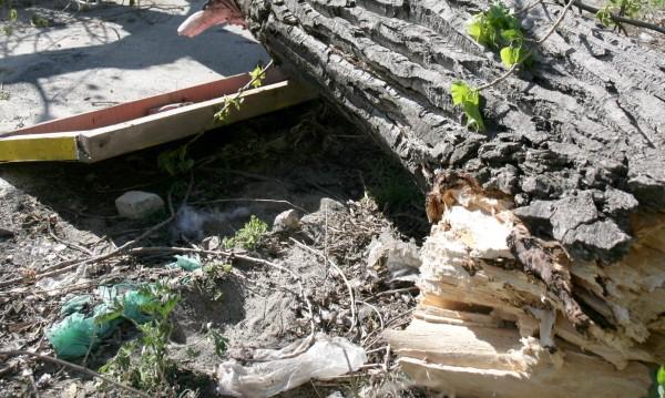 12-метрова топола помля автомобил в Русе