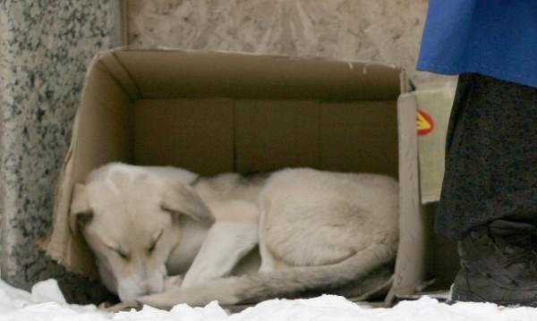 Строят по-лесно приюти за кучета