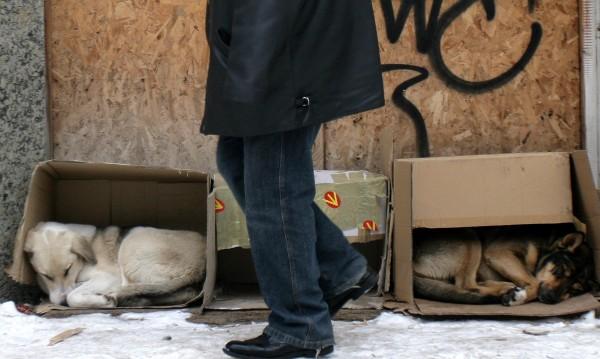 Столичните бездомни кучета на екскурзия до Пловдив