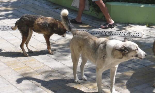 35% от бездомните кучета дошли от строителни обекти