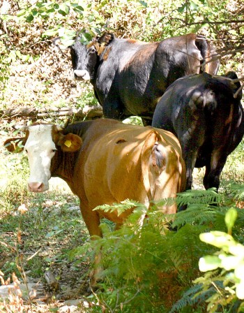 Кравар уби колега в пернишко село