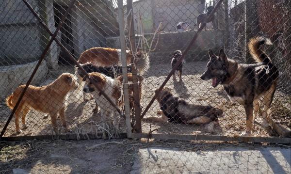 Увеличават броя на ловците на бездомни кучета