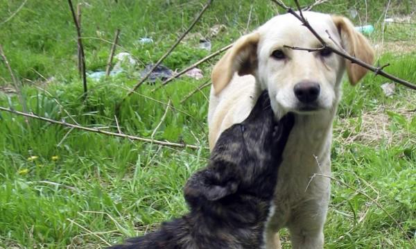 Седмично ловят по 110 бездомни кучета в София