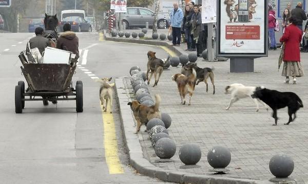 Решението за омбудсмана - шокова кастрация за кучетата