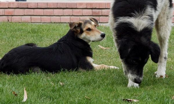 Две кучета открити отровени срещу 6-то РПУ
