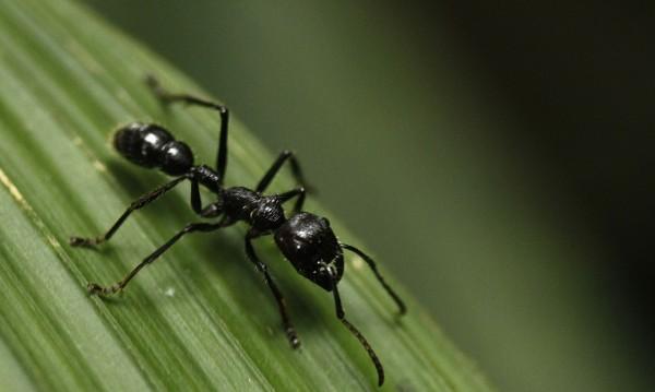 В Крим строят хотел за мравки, бръмбари, молци и други насекоми