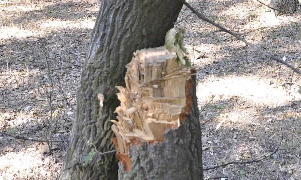 Дърво уби бракониер в Самоковско