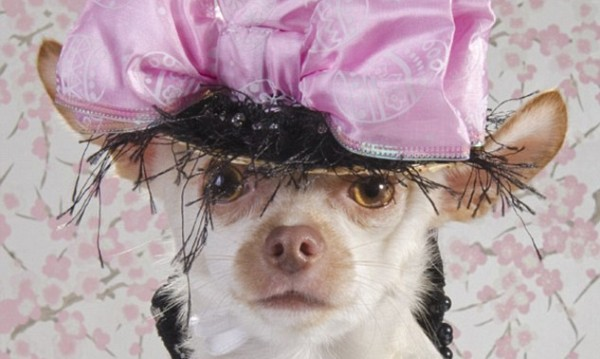 Кучета, достойни за Vogue
