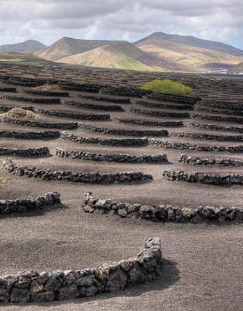 Вулканичните лозя в Лансароте