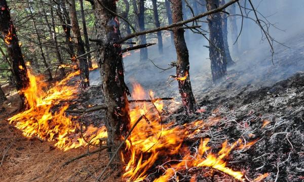 Огнеборци спасиха 70 дка гора край Попово