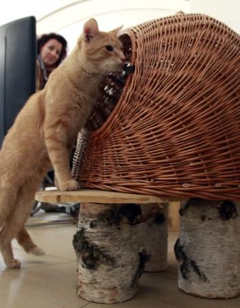 Котешките кафета - новият хит в Европа и Америка