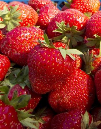 Правилната консумация на храните дава оптимум ползи за здравето