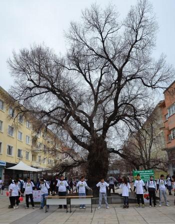 """Сливенската митрополия подкрепи Стария бряст за """"Европейско дърво на годината"""""""