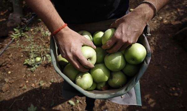Готвач бели ябълки с бормашина