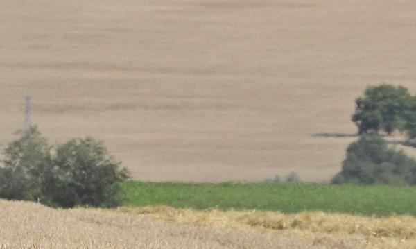 Ниви в Пернишкото са третирани с нелегални пестициди