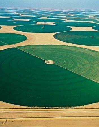 Чудатата ферма в сърцето на пустинята на Йордания