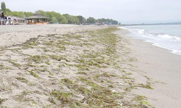 """Иманяри превръщат плажа на Слънчев бряг в """"лунен пейзаж"""""""