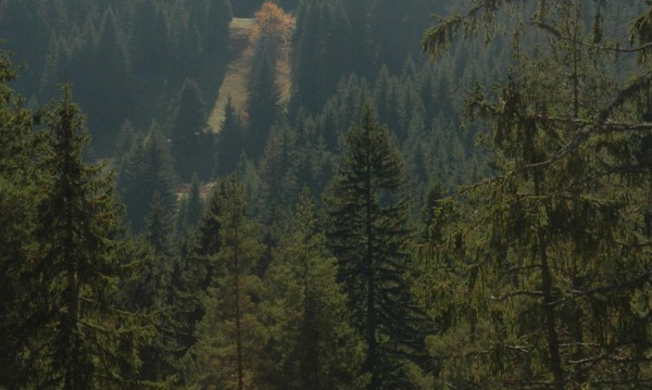 Протест на жители от Елешница заради спор за гори
