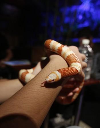 Как да действаме при ухапване от змия?