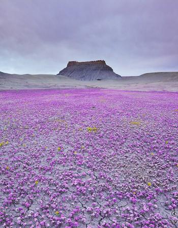 Най-ароматната пустиня