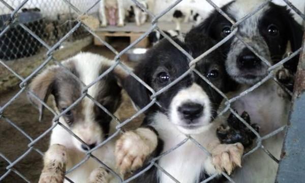 """Акция """"Осинови куче - спаси живот"""" започва в Стара Загора"""