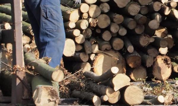 Двама горски пребити при опит да спрат незаконна сеч