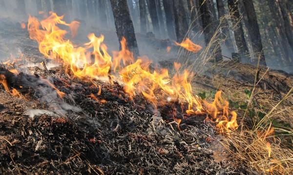 Пожар изпепели лозови масиви край Шабла