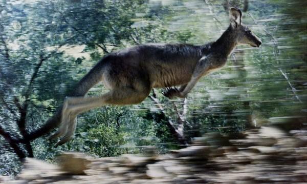Отровиха 3 кенгура в зоопарка в Хасково