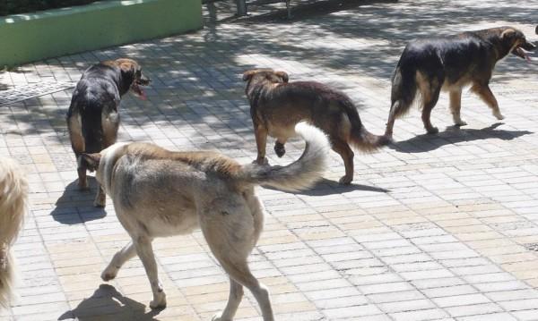 Най-много бездомни кучета има в Студентски град и Овча купел