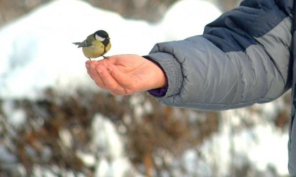 Пестициди убиват врабчета и врани, алармират природолюбители